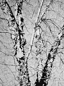 """River Birch Sky"" giclee of original pen & ink drawing; 24""x18"" image size"