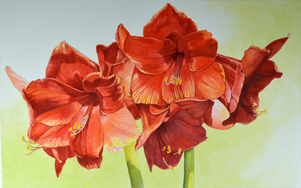 """Red Amaryllis"" watercolor 17.5"" x 27.5"""