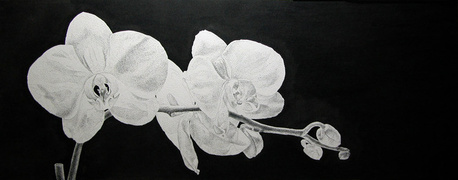 """White Orchid"" (A Study in Back Lighting) Ink (pen & brush) 7""x18"" Image Size"